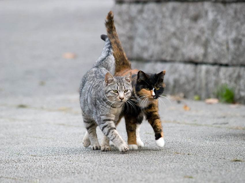 cat-cat-guide-two-cats-of-similar-age-and-temperament-getting-along.jpg